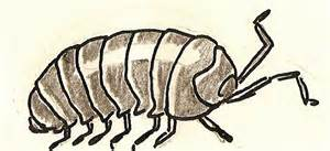 satisfactory comics animal alphabet i is for isopod