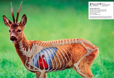 360 best target images on pinterest deer hunting gun direct hit m 229 ltavla med tr 228 ffomr 229 de p 229 r 229 djur roe deer
