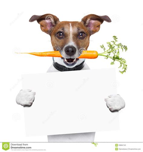 healthy dogs healthy with a carrot stock photography image 33864742