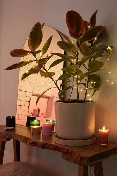 gorgeous ways to decorate your home with plants ten gorgeous ways to decorate your home with string lights