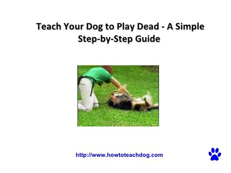 teach your dog to play dead a simple step by step guide