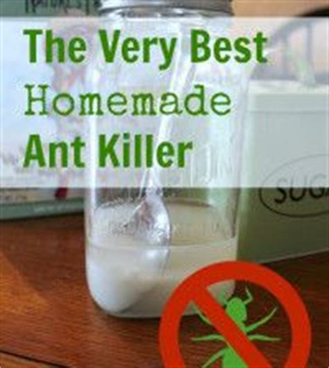 homemade bed bug killer 1000 images about how to keep insect out your home on