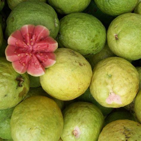 guyana fruit trees guyana fruits guyanese fruit