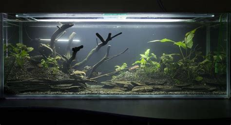 aquarium design using slate slate stepping stones from home depot that have been