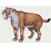 Tigre &224 Dents De Sabre En Afrique  Dinosoria