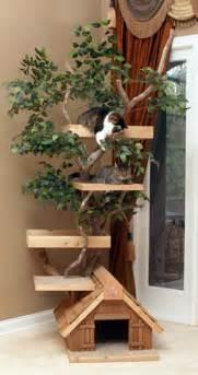 outdoor cat furniture me work outdoor cat furniture plans