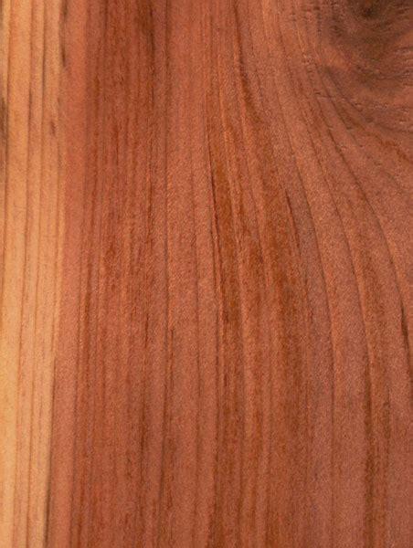 Amio Id Gamis White Maple quia wood id