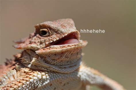 Lizard Meme Hehehe - lizards enjoying life
