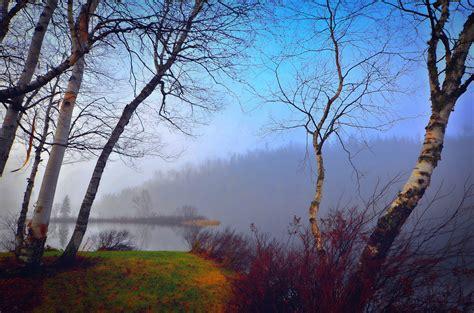imagenes naturaleza invierno fotos gratis paisaje 225 rbol naturaleza bosque rama