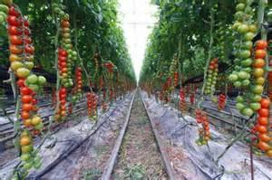 Patio Pickers Raised Garden Bed - los sistemas de riego en invernaderos industria del agua