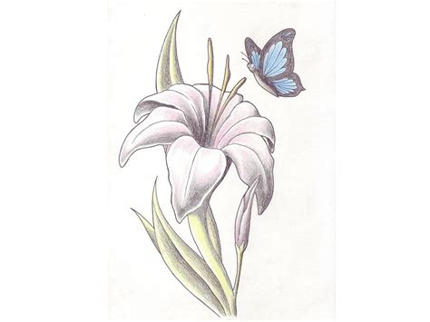 white lily tattoo top black and white calla drawing images for