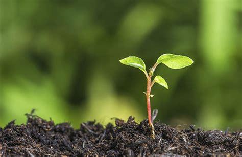 Planter Soil by Soil Plant Care Houston Tx Western Hs Lp