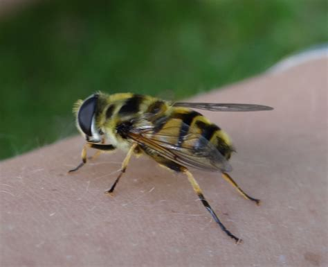 stung by wasp bee and wasp stings aid for