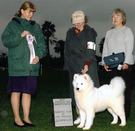 Sex Sweepstakes - landmark samoyeds in the show ring