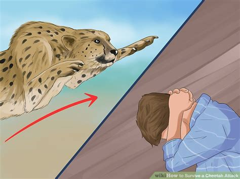 How to Survive a Cheetah Attack: 15 Steps (with Pictures) Jaws 9072