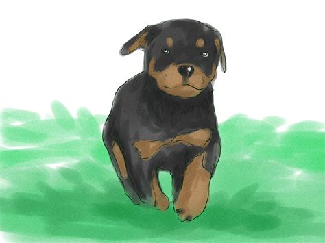 how to your rottweiler puppy with simple commands how to your rottweiler puppy with simple commands 5 steps