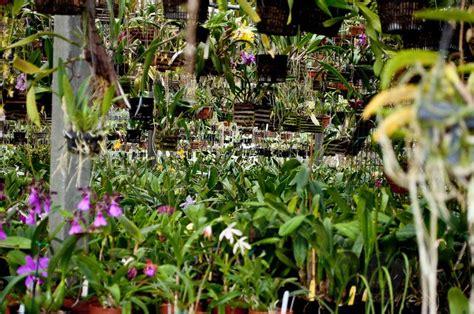 Rubin Garden Of by Orchids Forum Rubin In Orchids Garden Org