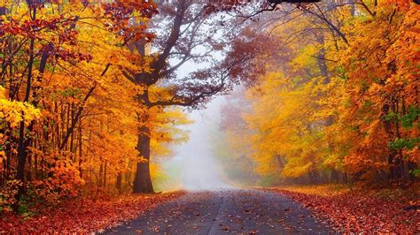 wallpaper hd 1920x1080 autumn hd fog in the autumn forest wallpaper download free 149965