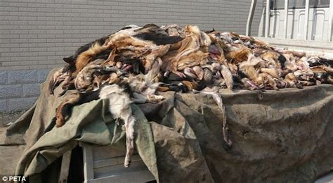 dogs in china china use the hide of pets slaughtered for food to make leather goods daily mail