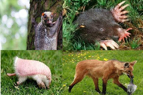 imagenes de animales raros en el mundo 22 fotos de animales raros que existen en el mundo