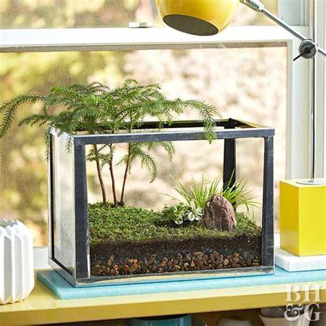 fill  small space   forest terrarium gardening