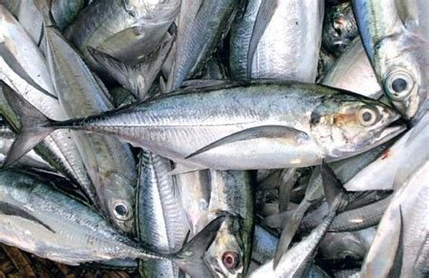 pier meaning in tamil marine fish landing kerala slips to fourth spot the new