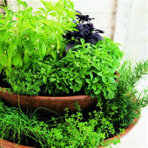 Herb Pots Outdoor | live life love and laughter making a herb garden