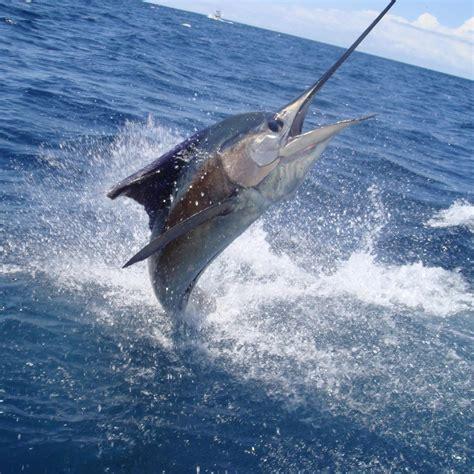 imagenes graciosos de pescadores pescadores comisiondpesca twitter