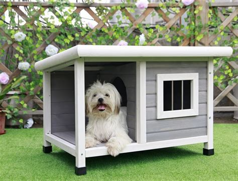 best outdoor dog houses top 10 best dog s houses our furry friends need a comfy home as well