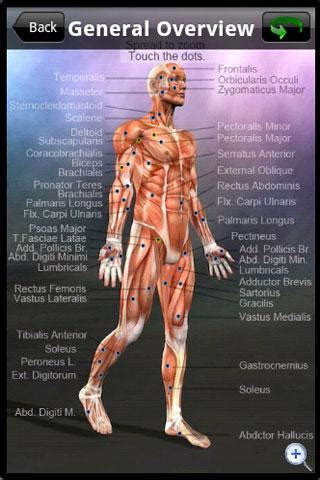 learn muscles anatomy review educational app store