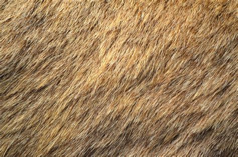 brown fur pattern deer fur free stock photo public domain pictures