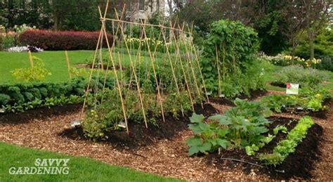 6 vegetable gardening tips every new food gardener needs