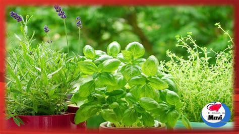 imagenes de flores medicinales 10 plantas medicinales que puedes cultivar en casa y sus