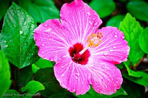 Tropical Flowers beautiful amazing tropical flowers