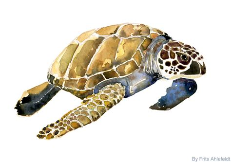 file sea turtle watercolor jpg wikimedia commons