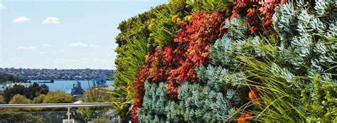 what are vertical gardens ambius