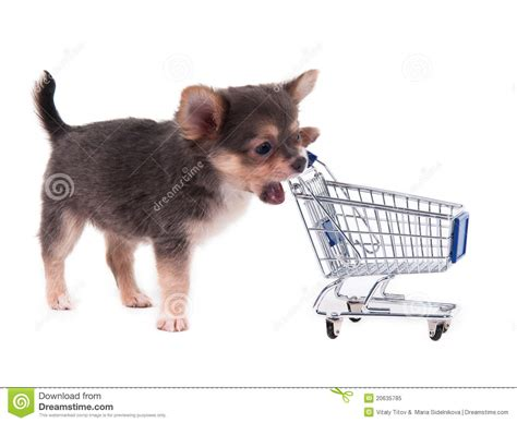 puppy shopping chihuahua puppy and shopping cart royalty free stock photo image 20635785