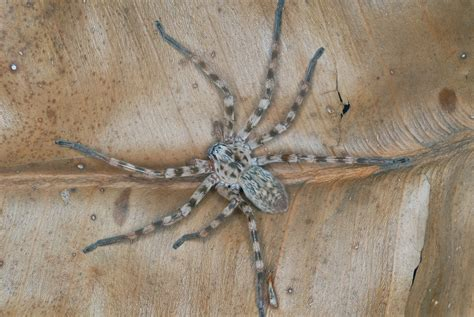 spider in my bed i found this spider in my bed on my summer house in mount