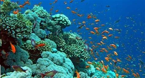 imagenes de minerales naturales recursos naturales marinos normatividad sobre el medio