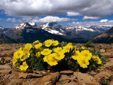 ci fioriti 25 posti nel mondo che diventano incredibili giardini