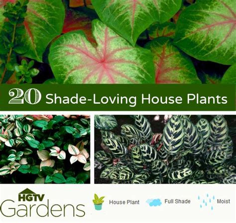 20 most common house plants 17 best ideas about indoor house plants on house plants indoor plants and