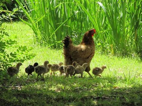 animales vertebrados donde viven como nacen animales ov 237 paros donde viven como nacen