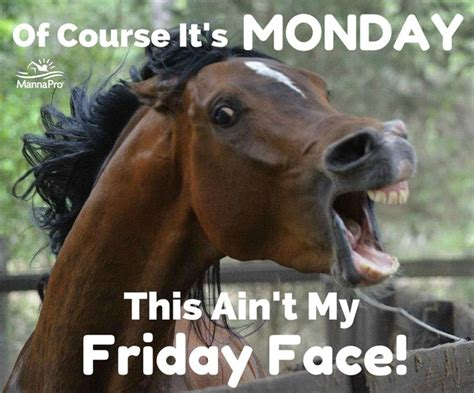 Funny Horse Memes - happy monday funny horse sayings humor pinterest