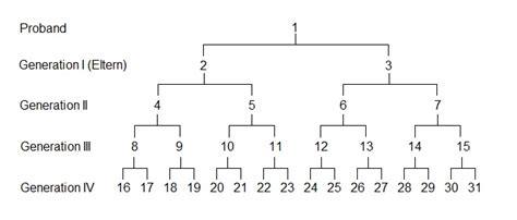 Kostenlose Vorlage Stammbaum Stammbaum Formular