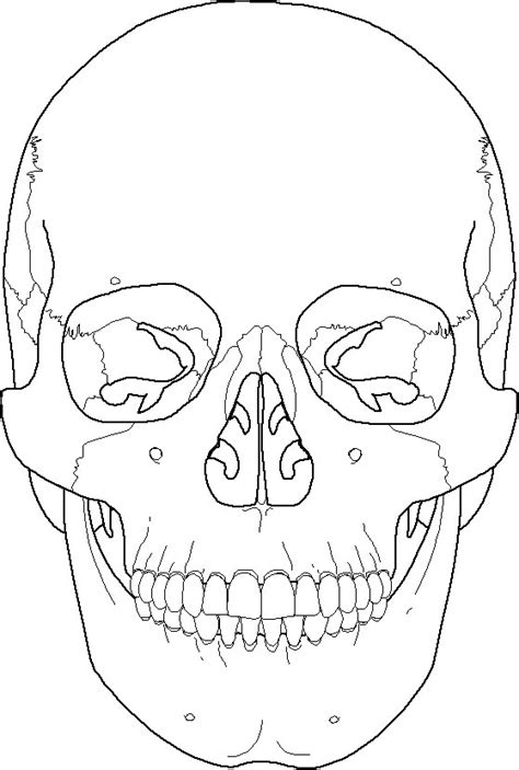anatomy coloring pages skull free coloring pages of labeling the skull