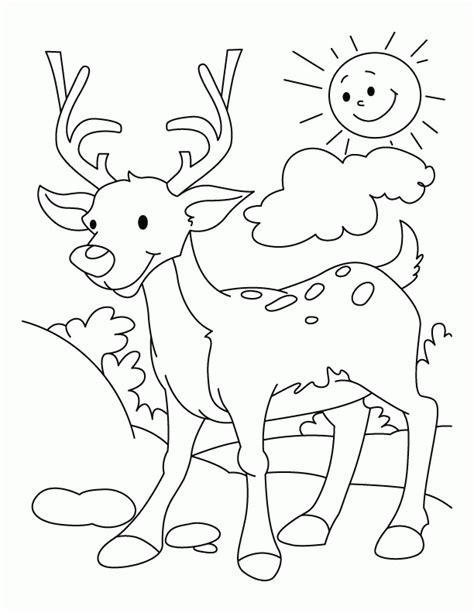 deer tracks coloring pages coloring pages for kids deer az coloring pages