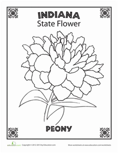indiana state flower coloring page education com