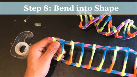 dna model using pipe cleaners and how to make a dna model using pipecleaners project