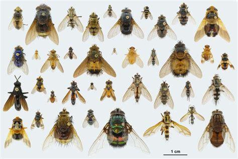 insetti appartamento arthropoda insecta flashcards by proprofs