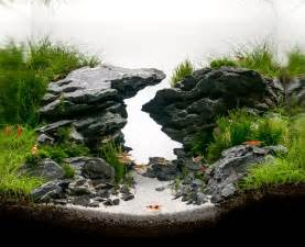 freshwater aquascape 25 best aquascaping ideas on aquarium ideas